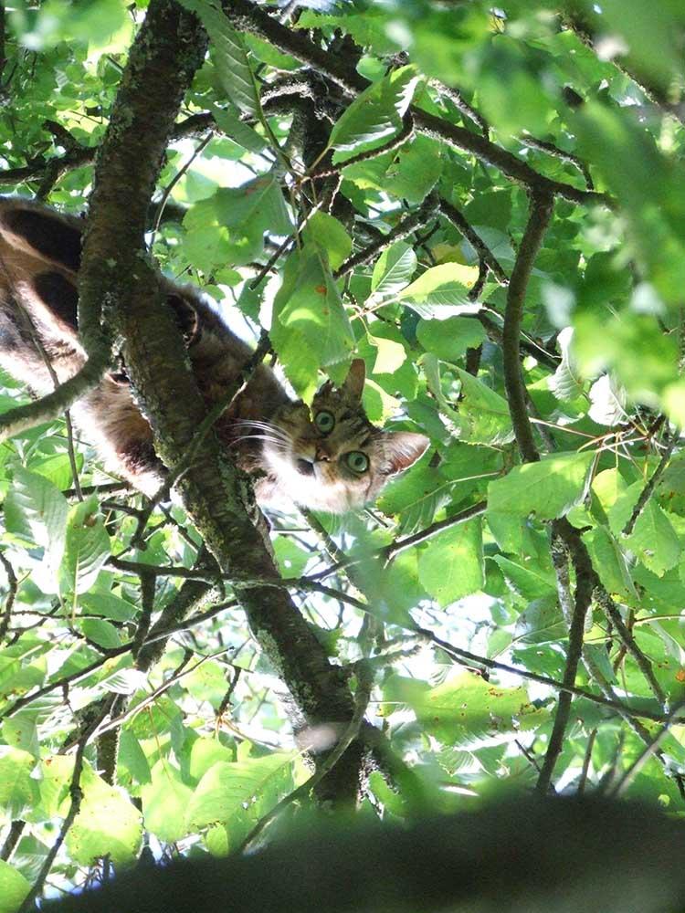 An acrobat cat